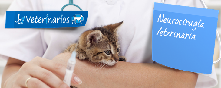 Neurocirugia Veterinariaa en Murcia - Jc1 Veterinarios