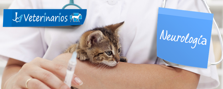 Veterinario en Murcia - Neurología veterinaria  - JC1 Veterinarios